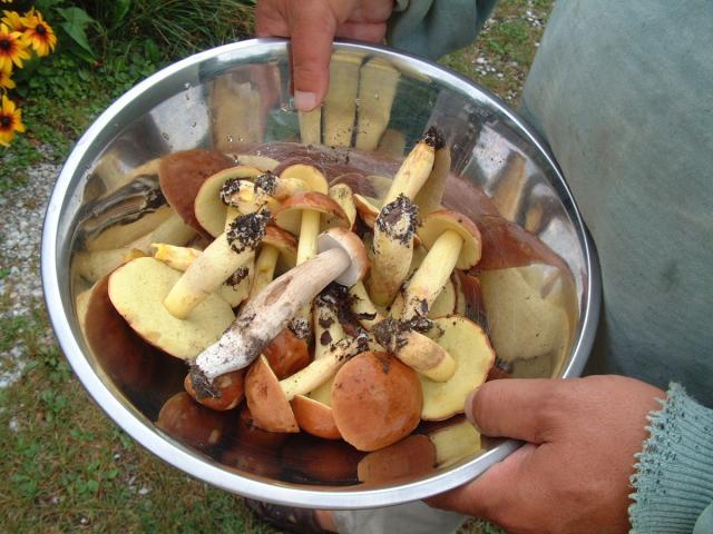 mushrooms - Bearskin Lodge